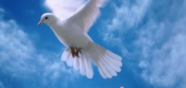 أقوال عن السلام