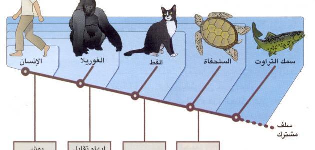 جهود العلماء في تصنيف الحيوانات