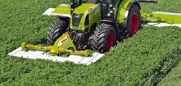 طريقة زراعة البرسيم
